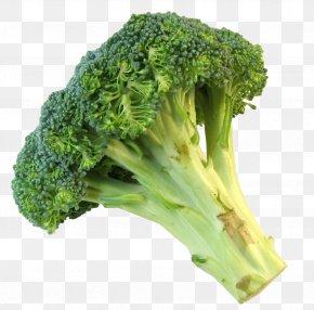 Fresh Broccoli - Broccoli Slaw Vegetable Food PNG