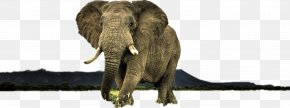 Elephant - High-definition Television Display Resolution High-definition Video Wildlife Wallpaper PNG