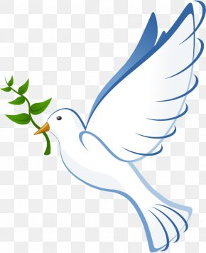 Pigeon - Columbidae Doves As Symbols Clip Art PNG