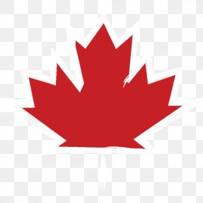 Canada Day Maple Leaf Feuille - Vector Graphics Maple Leaf Stock Photography Illustration Clip Art PNG