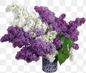 Vase - Common Lilac Pink Flowers Wallpaper PNG