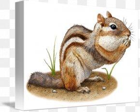 Squirrel - Fox Squirrel Eastern Chipmunk Animal PNG