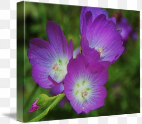 Botanical Flowers - Violet Plant Gallery Wrap Lilac Flower PNG