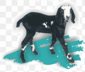 Goat - Goat Soap Mustang Stallion Canada PNG