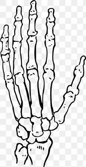 Skull - Skull Bone Human Skeleton Drawing Human Body PNG