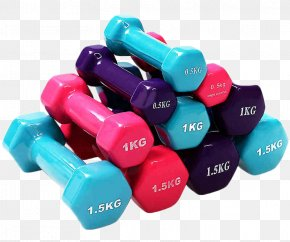 Dumbbell - Dumbbell Physical Exercise Physical Fitness Bodybuilding Barbell PNG