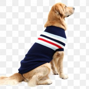 Golden Retriever - Chihuahua Golden Retriever T-shirt Sweater Pet PNG