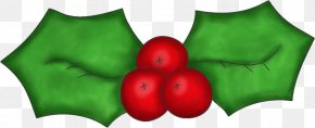 Christmas Holly Images - Common Holly Christmas Clip Art PNG