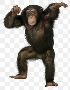 Black Gorilla - Common Chimpanzee Bonobo Monkey Ape Bornean Orangutan PNG