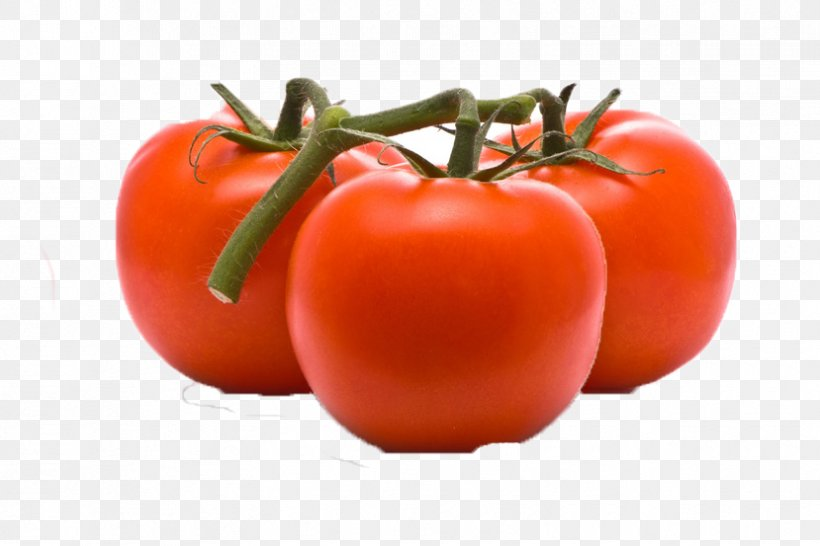 Tomato Cartoon, PNG, 829x553px, Plum Tomato, Bush Tomato, Cherry Tomatoes, Diet Food, Food Download Free