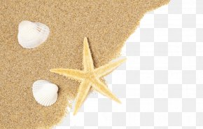 Sand And Shells - Shell Beach Seashell Sand PNG
