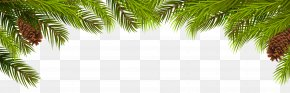 Pine Branches And Cones Decoration Clip Art - Arecaceae Pine Branch Leaf Evergreen PNG