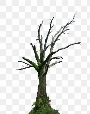 Deciduous - Tree Branch Root Snag PNG