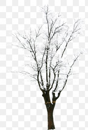 HD Photography Creative Synthesis Winter Trees - Twig Snow Tree Winter PNG