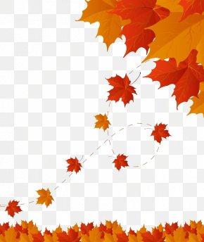 Maple Autumn Leaves Material - Autumn Leaf Color PNG