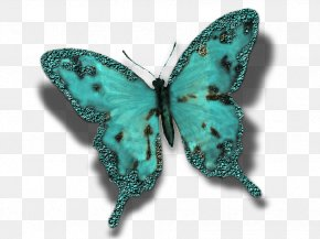 Creative Cards - Butterfly Insect Turquoise Moth Pollinator PNG
