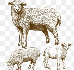 Sheep Vector - Sheep Grazing Stock Photography Illustration PNG