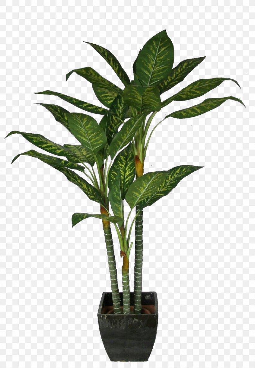 Palm Trees Coconut Bonsai Plants Png 900x1297px Palm Trees Alismatales Anthurium Areca Palm Arum Family Download