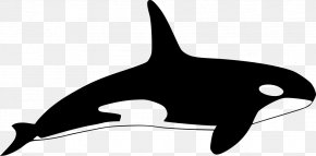 Dolphin - Killer Whale Dolphin Clip Art PNG