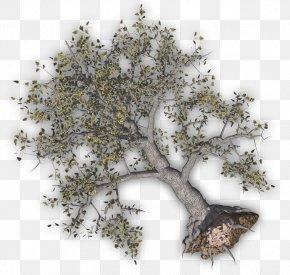 Tree Damage Cliparts - Twig Tree Clip Art PNG