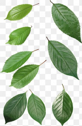 Leaf - Leaf Download Desktop Wallpaper Clip Art PNG