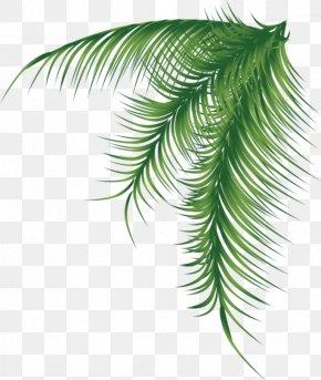 BAY LEAVES - Arecaceae Palm Branch Leaf PNG