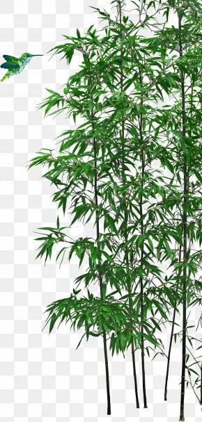 Bamboo - Bamboo Bonsai Tree PNG