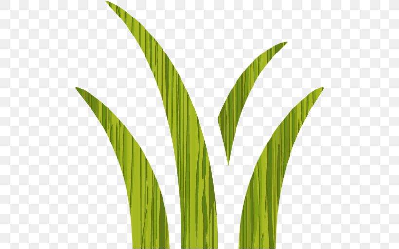 Leaf Grasses Plant Stem Commodity Arecaceae, PNG, 512x512px, Leaf, Arecaceae, Commodity, Family, Grass Download Free