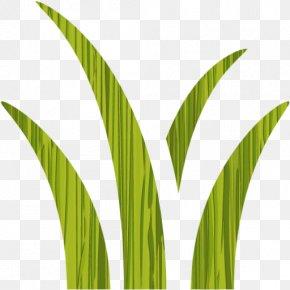 Leaf - Leaf Grasses Plant Stem Commodity Arecaceae PNG