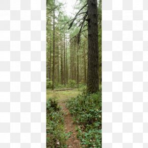 Amazon Forest - Forest Tree Trail Park Stock Photography PNG