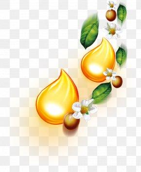 Tea Oil,tea Tree,Fruit Tea - Tea Tree Oil Tea Seed Oil Essential Oil PNG