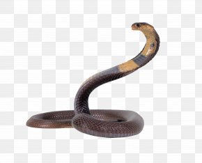 Snake Download - Snake King Cobra PNG