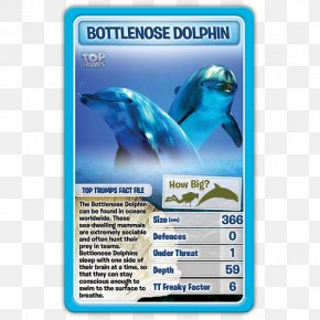 Dolphin - Dolphin Winning Moves Top Trumps Card Game PNG