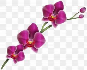 Purple Orchid Clipart Image - Orchids Clip Art PNG