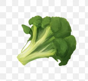 Broccoli - Vegetable Broccoli Fruit Cauliflower Food PNG