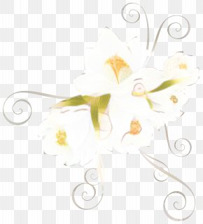 Camomile Flower - Floral Flower Background PNG