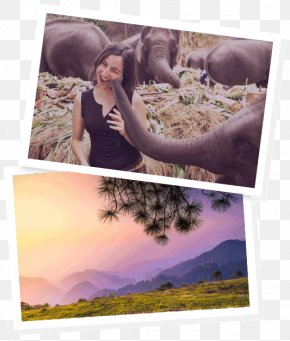 Chiang Mai - Chiang Mai Work And Travel USA Travel Visa Photomontage Picture Frames PNG