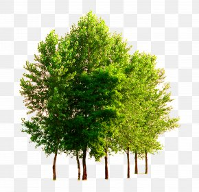 Trees, Tree, Taobao Material, - Heat Technology Natural Resource Air PNG