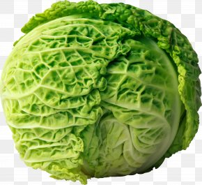 Cabbage Image - Cabbage Roll Coleslaw Red Cabbage PNG