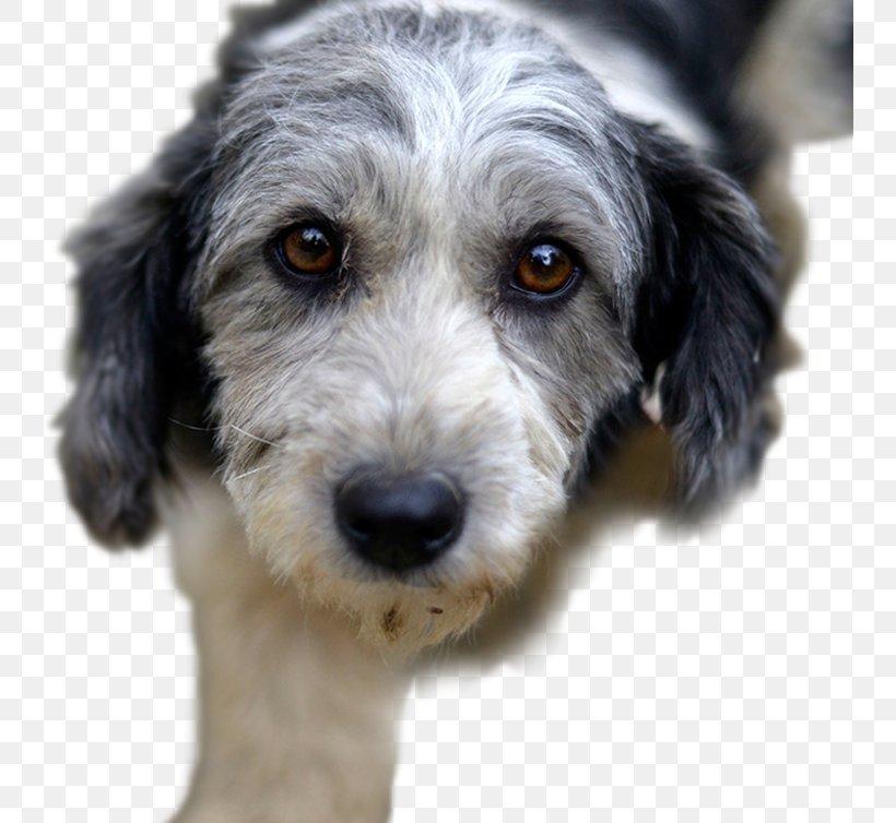 Puppy Rescue Dog Pet Australian Terrier