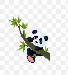 Vector Colored Panda Animals - Giant Panda Wall Decal Sticker PNG