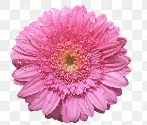 Pink Flowers - Flower Bouquet Aster Rose PNG