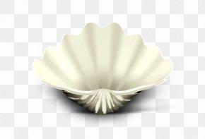 Shell - Tableware Seashell PNG
