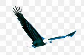 Eagle - Eagle Fond Blanc PNG