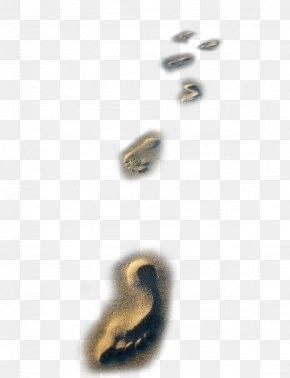 Nice Beach Footprints - Beach Sand Footprint Download PNG