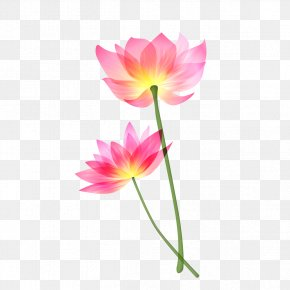 Red Lotus - Person Gratitude California God Happiness PNG