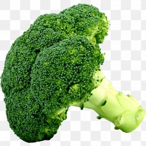 Broccoli - Broccoli Slaw Cruciferous Vegetables Food PNG