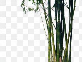 bambu images bambu transparent png free download bambu images bambu transparent png