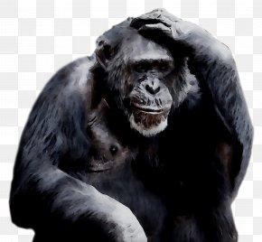 Common Chimpanzee Ape Gorilla Orangutan Primate PNG