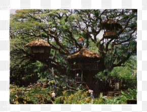 Lush Tree Top - The Swiss Family Robinson Swiss Family Treehouse Tree House Adventure Film PNG